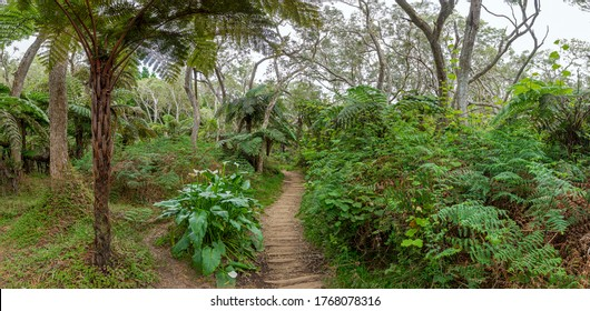 Wanderweg zum Canyon Trou de Fer auf der Insel La Réunion - Panoramablick