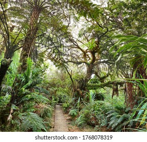 Wanderweg zum Canyon Trou de Fer auf der Insel La Réunion