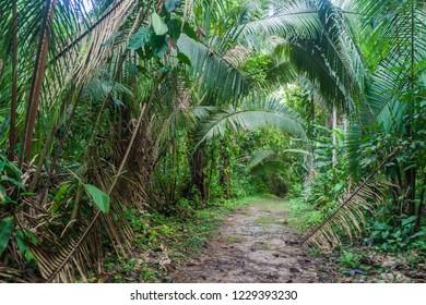 Hiking trail in Cockscomb Basin Wildlife Sanctuary, Belize.