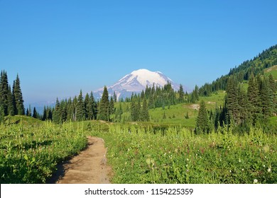 Hiking trail cuts thru wildflower meadow to this spectacular view of evergreen trees & snow covered Mount Rainier under clear blue sky on nice August morning at WA state's Mount Rainier National Park.