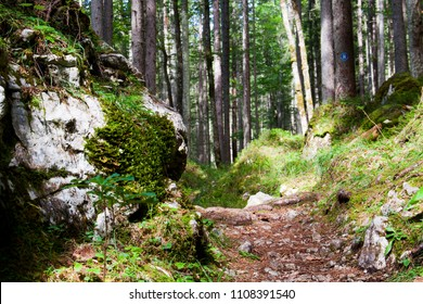 A hiking trail at the Eibsee, near the famous Zugspitze. The Zugspitze is the highest point in Germany and famous visitor spot. near Garmisch- Partenkrichen, Bavaria.