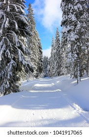 Hiking trail to the Feldberg Mountain. Black Forest, Germany.
