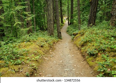 Hiking trail in fir forest, vancouver island, british columbia, Canada