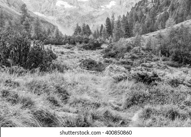 Hiking trail in the forest in black and white