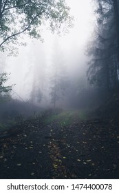 Hiking trail in the forest is covered by colorful Leaves. Dark forest with fog, Portrait