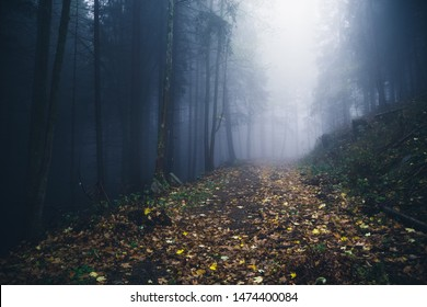 Hiking trail in the forest is covered by colorful Leaves. Dark forest with fog