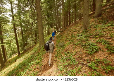 Hiking trail in forest in Prespa national park near Bitola on Baba mountain in Summer with tourists hiking
