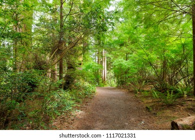 Hiking trail at Fort Clatsop in the lush green forest along Lewis and Clark River in Oregon