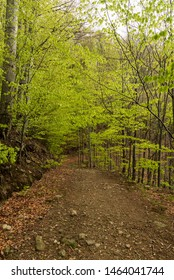 hiking trail in fresh springtime deciduous forest bellow Velka Cantoryje hill in Slezske Beskydy mountains in Czech republic near borders with Poland