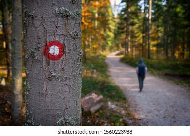Hiking trail with girl in autumn on the mountain red and white circular mark on tree bark. Tara mountain Serbia, Europe