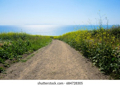 Hiking Trail going to the ocean with flowers on the path