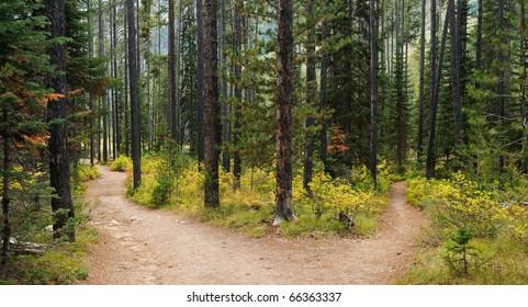 Hiking trail in Grand Teton National Park, Wyoming.