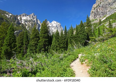Hiking trail in Grand Teton National Park in Wyoming