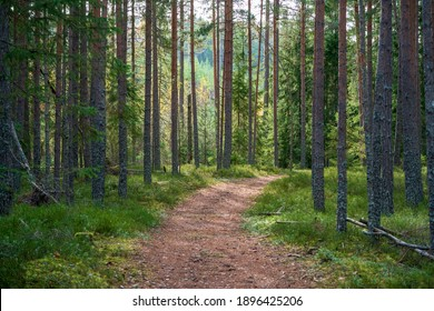 A hiking trail in a green forest