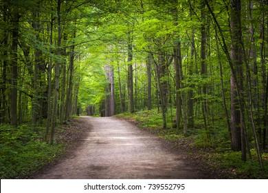 Wanderweg im grünen Sommerwald mit Sonnenschein. Schutzgebiet Hilton Falls, Ontario, Kanada.