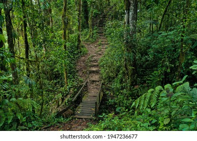 A hiking trail inside a tropical forest leading to an old wooden bridge