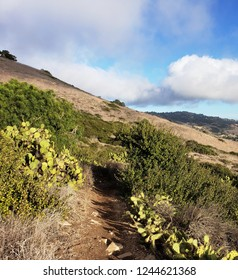 Hiking trail leading up a hill with cacti and coastal sage scrub, California