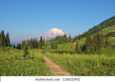 Hiking trail leads to stunning summer scene at Mount Rainier National Park. Trail is surrounded by wildflowers in grass & behind a field with evergreen trees is snow covered Mount Rainier & blue sky.