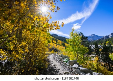 Hiking trail lined up with aspen trees in the Eastern Sierra mountains, John Muir wilderness, California; sunny fall day