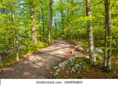 Hiking trail in the lower lakes section of the park, Plitvice Lakes National Park, Croatia