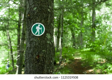 Hiking Trail Markers on a Tree in the Woods