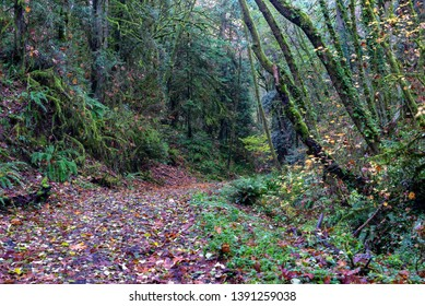 Hiking trail in the Marquam Nature Trail in Portland, Oregon
