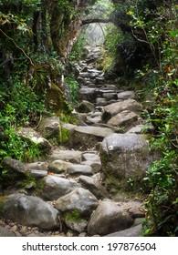 Hiking trail at Mount Kinabalu in Sabah, East Malaysia.