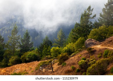 Hiking trail to Muir Woods National Monument.  Trail is in the Mt. Tamalpais state preserve in the San Francisco Bay Area, California