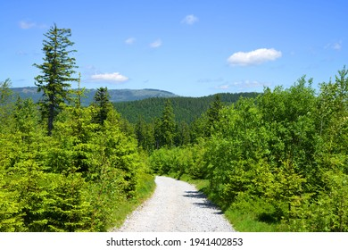 Hiking trail in the National park Bayerischer Wald, Germany. - Shutterstock ID 1941402853