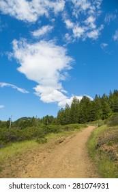 Hiking trail near Muir Woods National Monument, California