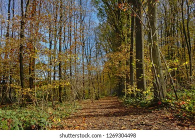 Hiking trail in Raspaillebos forest on a sunny autumn day with clear bleu sky, Geraardsbergen, Flanders, Belgium