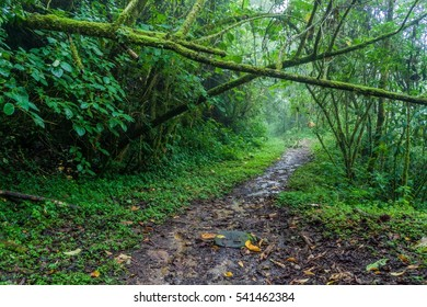 Hiking trail Sendero Los Quetzales in National Park Volcan Baru during rainy season, Panama.