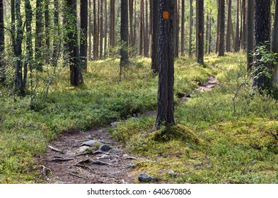 Hiking trail with signs in the forest. Finland