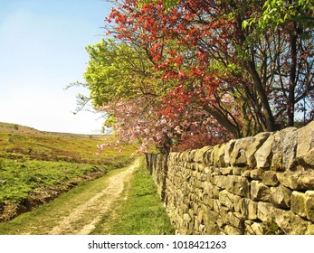 Hiking trail in springtime in the vicinity of Skipton, Yorkshire, England, with fields and heath on one side and a stone wall and trees on the other side