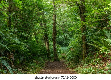 Hiking trail start in the green forest at summer day