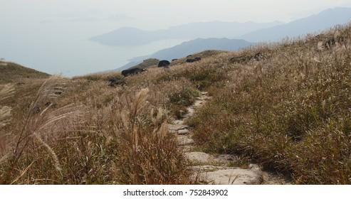 Lantau Trail Images, Stock Photos & Vectors | Shutterstock