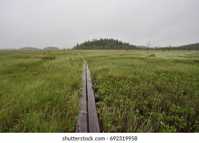 Hiking trail in the swamp, Martimoaava, Lapland. Hiking trail in the middle of swamp.