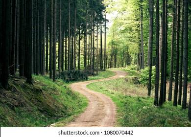hiking trail Teutoburger Wald