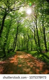 Hiking trail in Teutoburger Wald near Borgholzhausen, Westphalia, Natural Preserve Terra vita, Unesco Heritage,  Germany