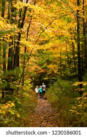 Hiking Trail through the Adirondack Mountains in Fall