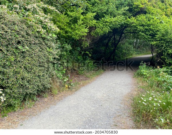 a hiking trail through arched tunnel trees lush forest path
