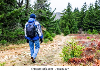 Hiking trail through colorful red foliage fall autumn forest with green dark pine trees on path in West Virginia and young man walking hiker