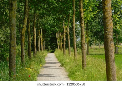 Hiking trail through the flemish countryside with rows of trees through the meadows of the flemish countryside