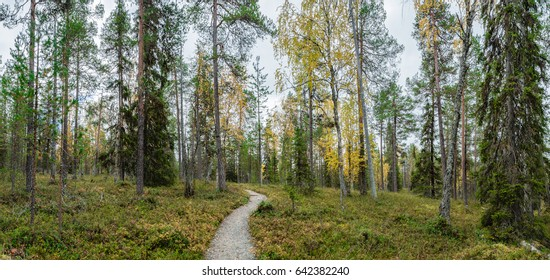 Hiking trail through the forest in Northern Finland.