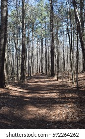 Hiking trail through the forest in Wall Doxey State Park, Mississippi