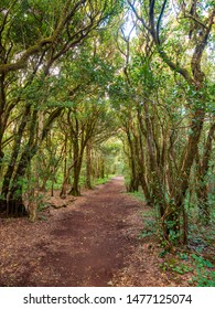 Hiking trail through laurel forest in Anaga mountains, Tenerife Canary Islands, Spain