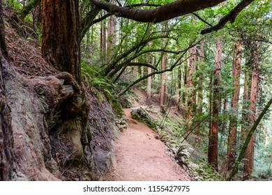 Hiking trail through the redwood forests of Muir Woods National Monument, Marin County, north San Francisco bay area, California