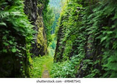 Hiking trail through steep cliffs / valley / canyon