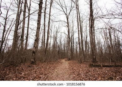 Hiking trail through the woods during winter in Arkansas