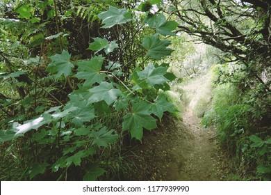 hiking trail trough dense vegetation in Etna Park, Sicily